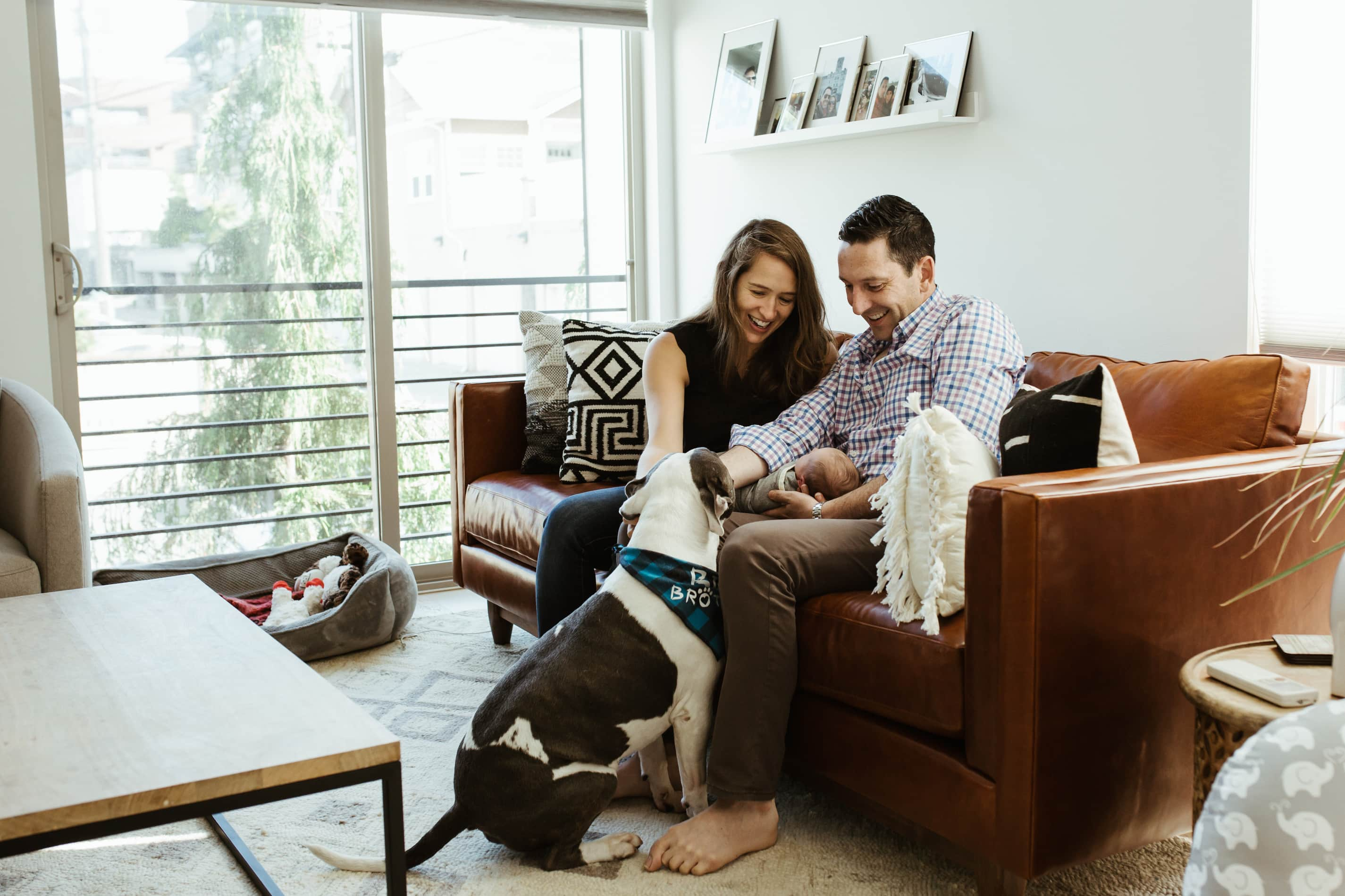in home newborn session in the denver area mom and dad hold newborn while sitting on the couch petting there pitbull who is nuzzled in with baby